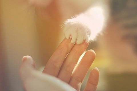 kitten paw holding human finger