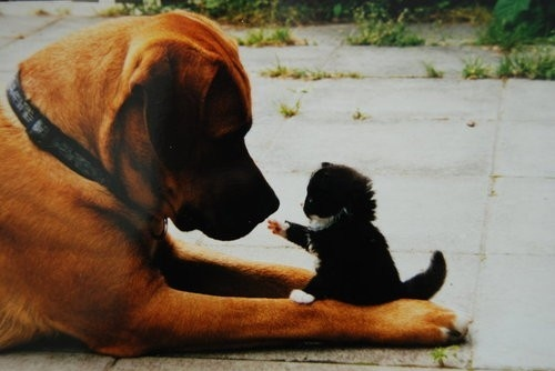 dog and a kitten